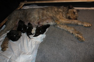 Babys 1 day old